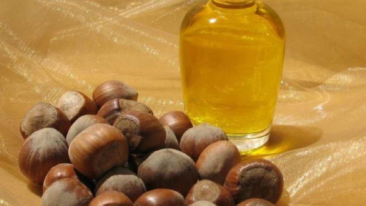 khasiat minyak kemiri