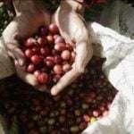 Bank Indonesia dukung perluasan akses pasar ekspor kopi
