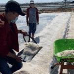 Program Pengabdian Masyarakat oleh Mahasiswa (PMM) Universitas Muhammadiyah Malang (UMM) kelompok 30 Desa Pinggir Papas, Kecamatan Kalianget, Kabupaten Sumenep, Jatim membantu para petani garam, Minggu (20/09/2020).